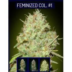 Feminized Col 1 · Advanced...