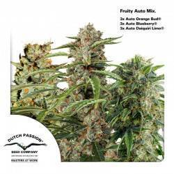 FRUITY AUTOFLOWER MIX ·...