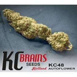 K.C. 48 AUTO · K.C.Brains...