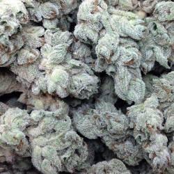 WHITE MAGIC · Mandala Seeds...