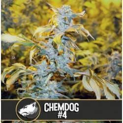 Chemdog 4