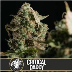 Critical Daddy Purple ·...