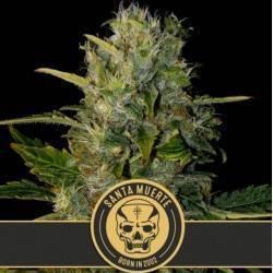 Santa Muerte · Blimburn Seeds