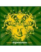 Dr Green Seeds - Maximum Quality in Feminized and Autoflowering Seeds